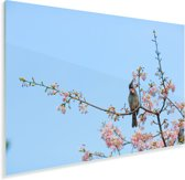 Veldleeuwerik tussen de bloesems Plexiglas 90x60 cm - Foto print op Glas (Plexiglas wanddecoratie)