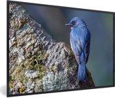 Foto in lijst - Een blauwe Azuurvliegenvanger zit op een rots fotolijst zwart 60x40 cm - Poster in lijst (Wanddecoratie woonkamer / slaapkamer)