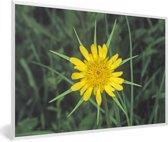 Foto in lijst - Gele morgenster tussen het groene gras fotolijst wit 60x40 cm - Poster in lijst (Wanddecoratie woonkamer / slaapkamer)