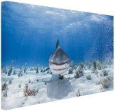 Aanzwemmende haai Canvas 180x120 cm - Foto print op Canvas schilderij (Wanddecoratie woonkamer / slaapkamer) / Dieren Canvas Schilderijen XXL / Groot formaat!