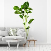 Fotobehang vinyl - Close up van  enkelvoudige witte waterkers plant breedte 300 cm x hoogte 300 cm - Foto print op behang (in 7 formaten beschikbaar)