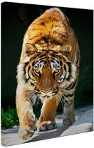 FotoCadeau.nl - Sluipende tijger Canvas 40x60 cm - Foto print op Canvas schilderij (Wanddecoratie)