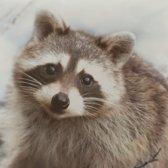 Sierkussen wasbeer woonkussen thema dieren cadeaus woon accessoires dieren