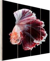 Sierlijke vis zwarte achtergrond Hout 80x120 cm - Foto print op Hout (Wanddecoratie)