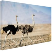 Twee rennende struisvogels Canvas 80x60 cm - Foto print op Canvas schilderij (Wanddecoratie woonkamer / slaapkamer) / Dieren Canvas Schilderijen