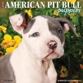 American Pit Bull Terrier Puppies 2021 Calendar