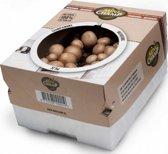Kweekset 7,5 liter bruine champignons - 2 sets
