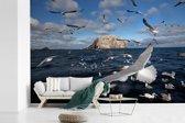 Fotobehang vinyl - Zwerm jan-van-gent boven de Noordzee breedte 360 cm x hoogte 240 cm - Foto print op behang (in 7 formaten beschikbaar)