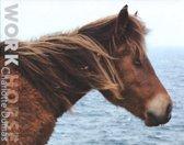 Charlotte Dumas - Work Horse