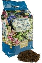 Magical Hortensia potgrond