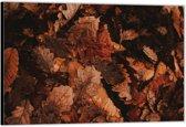 Dibond –Herfstbladeren op de Grond– 40x30 Foto op Aluminium (Wanddecoratie van metaal)