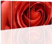 Schilderij - Gepassioneerde roos