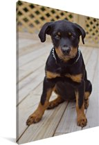 Een Rottweiler puppy zit Canvas 40x60 cm - Foto print op Canvas schilderij (Wanddecoratie woonkamer / slaapkamer) / Huisdieren Canvas Schilderijen
