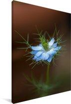 Felblauwe nigelle bloem Canvas 90x140 cm - Foto print op Canvas schilderij (Wanddecoratie woonkamer / slaapkamer)