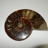 Ammoniet, Geslepen, natuurlijk fossiel uit Madagaskar