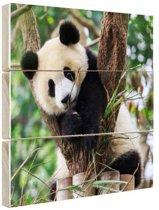 Panda welp Hout 120x80 cm - Foto print op Hout (Wanddecoratie)