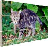 Jonge huiskat Hout 60x40 cm - Foto print op Hout (Wanddecoratie)