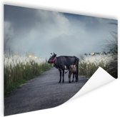Koe met kalf Poster 150x75 cm - Foto print op Poster (wanddecoratie woonkamer / slaapkamer)