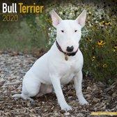 Bull Terrier Kalender 2020