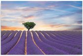 Schilderij - Veld met lavendel, paars, blauw, groen, 1 deel