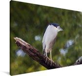 Schuitbekreiger op een tak Canvas 180x120 cm - Foto print op Canvas schilderij (Wanddecoratie woonkamer / slaapkamer) XXL / Groot formaat!