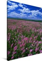 Alfalfagebied die in de zomer bloeien Canvas 20x30 cm - klein - Foto print op Canvas schilderij (Wanddecoratie woonkamer / slaapkamer)