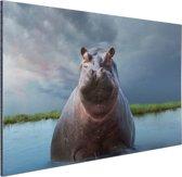 Nijlpaard in het water Aluminium 180x120 cm - Foto print op Aluminium (metaal wanddecoratie) XXL / Groot formaat!