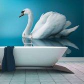 Fotobehang - Witte Zwaan , blauw , 5 maten
