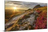 Roze bloemen op het heuvellandschap van het Nationaal park Dartmoor Aluminium 90x60 cm - Foto print op Aluminium (metaal wanddecoratie)