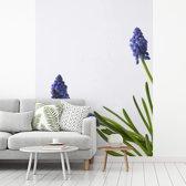 Fotobehang vinyl - Druifhyacinten op een lichte achtergrond breedte 210 cm x hoogte 280 cm - Foto print op behang (in 7 formaten beschikbaar)