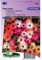 Sluis Garden Ijsbloem Magic Carpet Mix (middagbloem)