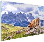 Koeien grazen alpenweide Glas 60x40 cm - Foto print op Glas (Plexiglas wanddecoratie)
