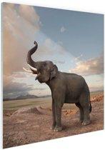 Trompetterende olifant in de woestijn Glas 50x50 cm - Foto print op Glas (Plexiglas wanddecoratie)