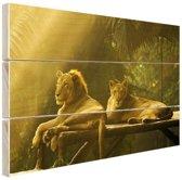 FotoCadeau.nl - Leeuwen in de jungle Hout 80x60 cm - Foto print op Hout (Wanddecoratie)