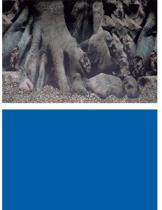 Superfish - Aquariumdecoratie -  Poster - 100 X 49 cm