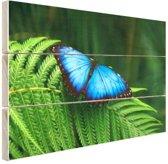 Morpho vlinder Hout 80x60 cm - Foto print op Hout (Wanddecoratie)