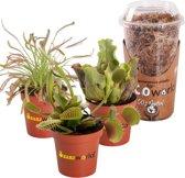 Swampworld Mini Vleesetende Planten Mix P6 - 3 Stuks + Mos
