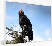 Foto in lijst - Een Californische condor zit in een boom fotolijst wit 40x30 cm - Poster in lijst (Wanddecoratie woonkamer / slaapkamer)