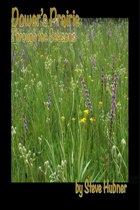 Dower's Prairie through the Seasons
