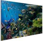 Levendige onderwaterwereld Aluminium 90x60 cm - Foto print op Aluminium (metaal wanddecoratie)