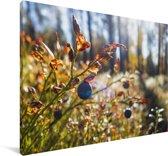 Blauwe bessen in een bos Canvas 60x40 cm - Foto print op Canvas schilderij (Wanddecoratie woonkamer / slaapkamer)
