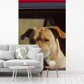 Fotobehang vinyl - Een Staffordshire Bull Terrier in een rode auto breedte 335 cm x hoogte 500 cm - Foto print op behang (in 7 formaten beschikbaar)