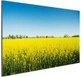 Oliezaadveld foto Aluminium 120x80 cm - Foto print op Aluminium (metaal wanddecoratie)