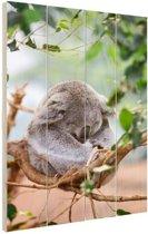 Zittende koala met bladeren Hout 60x80 cm - Foto print op Hout (Wanddecoratie)