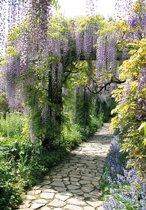 Tuinposter laan met blauwe regen