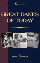 Great Danes of Today
