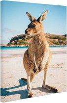 FotoCadeau.nl - Een kangoeroe op het strand Canvas 60x80 cm - Foto print op Canvas schilderij (Wanddecoratie)