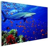 Haai bij koraalrif Glas 90x60 cm - Foto print op Glas (Plexiglas wanddecoratie)