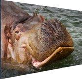 Zwemmende nijlpaard Aluminium 60x40 cm - Foto print op Aluminium (metaal wanddecoratie)