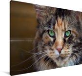 Maine Coon kat met groene ogen Canvas 140x90 cm - Foto print op Canvas schilderij (Wanddecoratie woonkamer / slaapkamer) / Huisdieren Canvas Schilderijen
